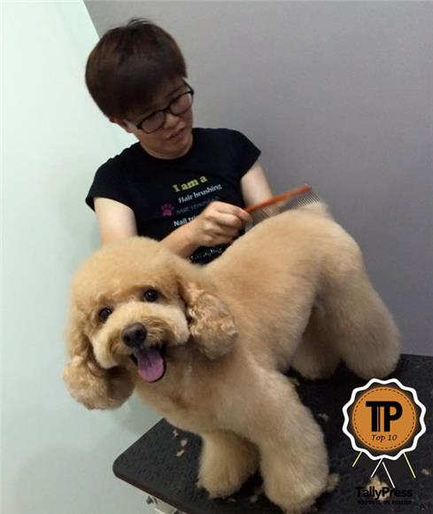 Dog Grooming On Invaber Yin Mobile Pets Grooming Service Bozzi